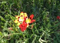Sacramento Flower