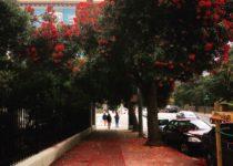 SanFrancisco Flowers